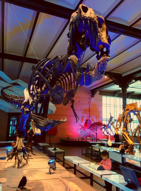 Dino Rex 1