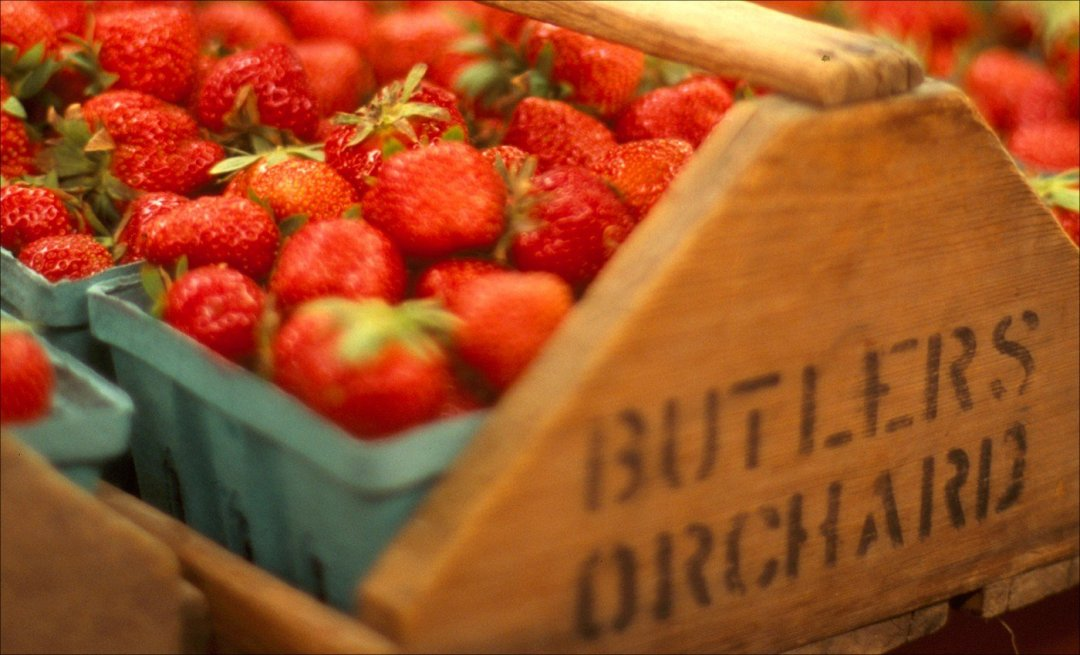 Breast Cancer Mouse Study Shows Eating Strawberries Can Prevent Breast Cancer