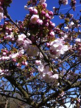 Blossom at MHP