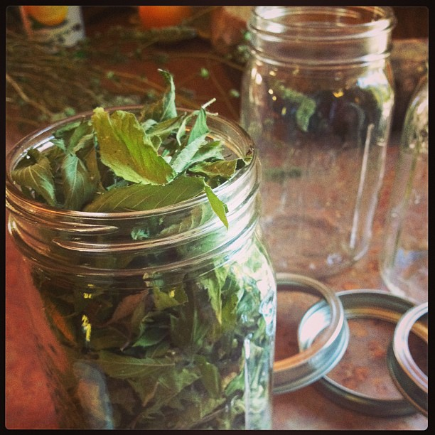 Mason jar full of mint leaves that were grown and dried at home