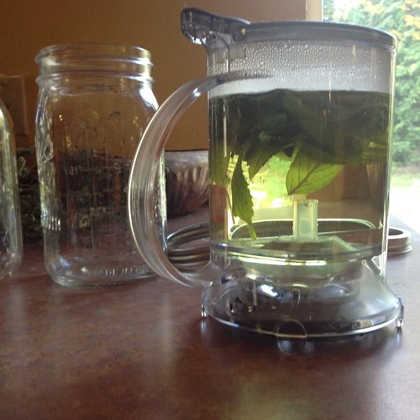 Steeping the mint tea you grew and dried yourself