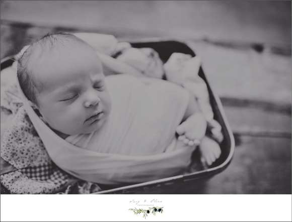 black and white newborn sessions, bundled, blankets, buckets, bonnets, babies, Twig and Olive newborns