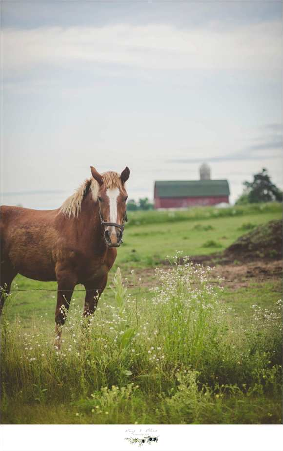 family horse, red barn, rustic, vintage, green grass