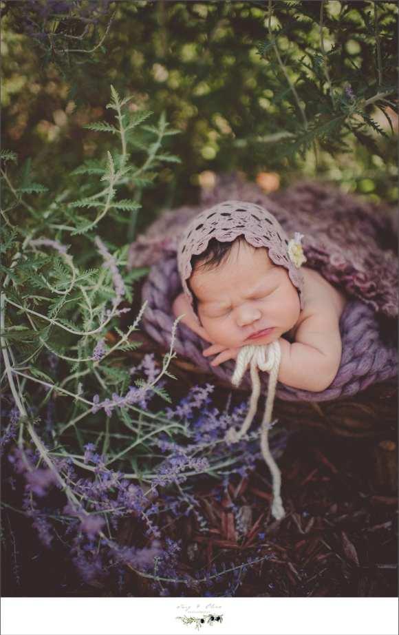 purple flowers, purple quilts, purple bonnets, happy babies