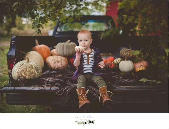 pumpkins and gords