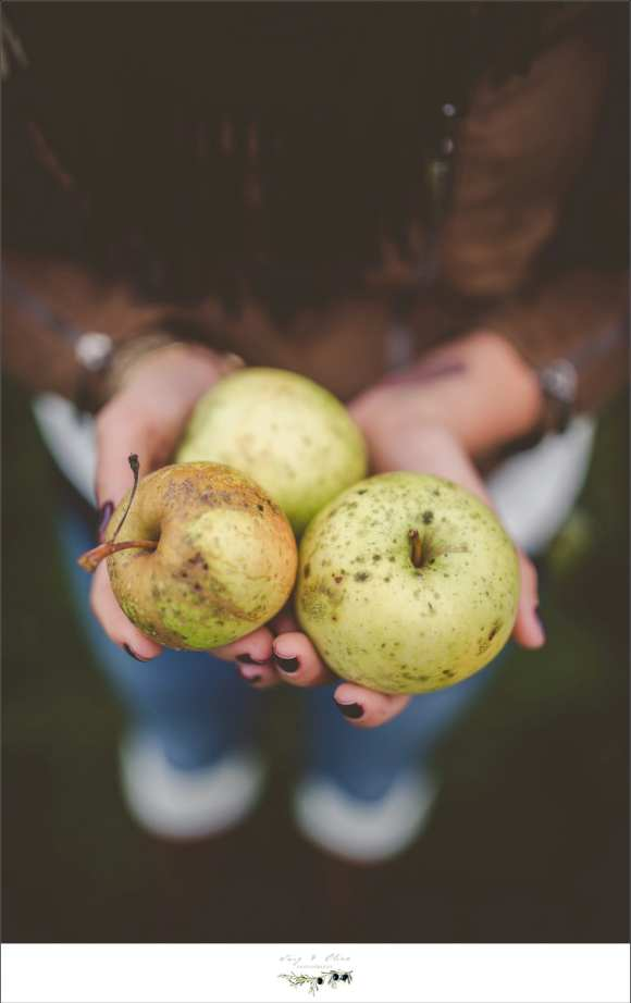 farm to table apples