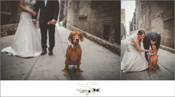 wedding pictures with dog