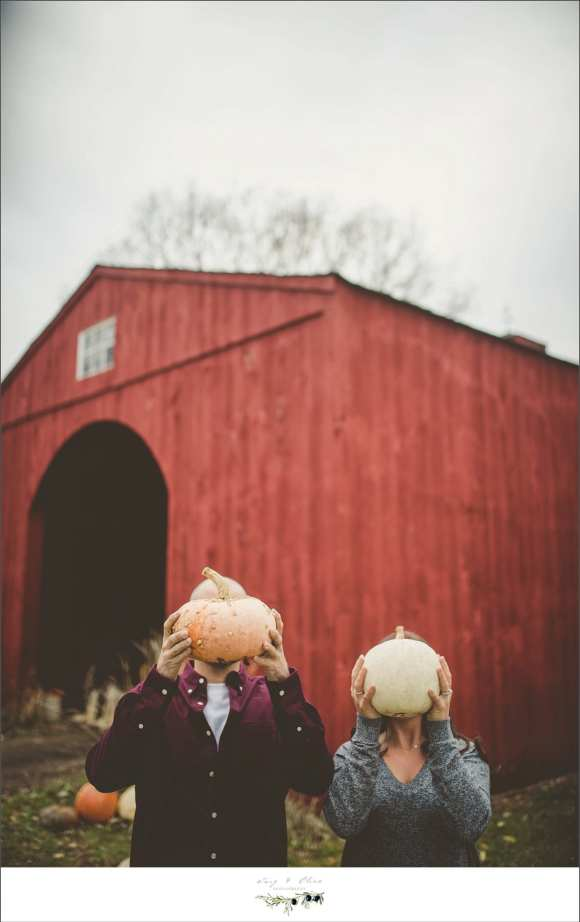 pumpkins and barns