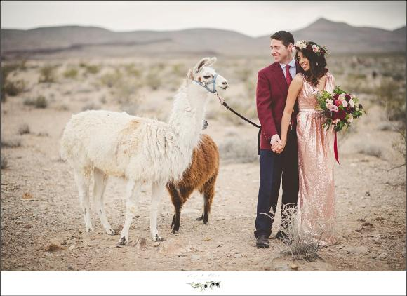 llama in the desert