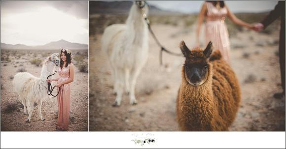 twig and olive photography