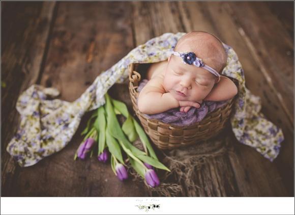 purple accent flowers