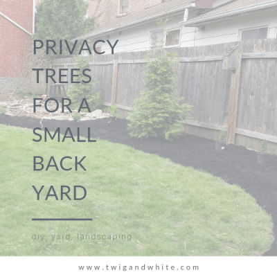 Privacy Trees for a Small Back Yard