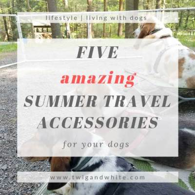 5 Amazing Summer Travel Accessories for your Dogs