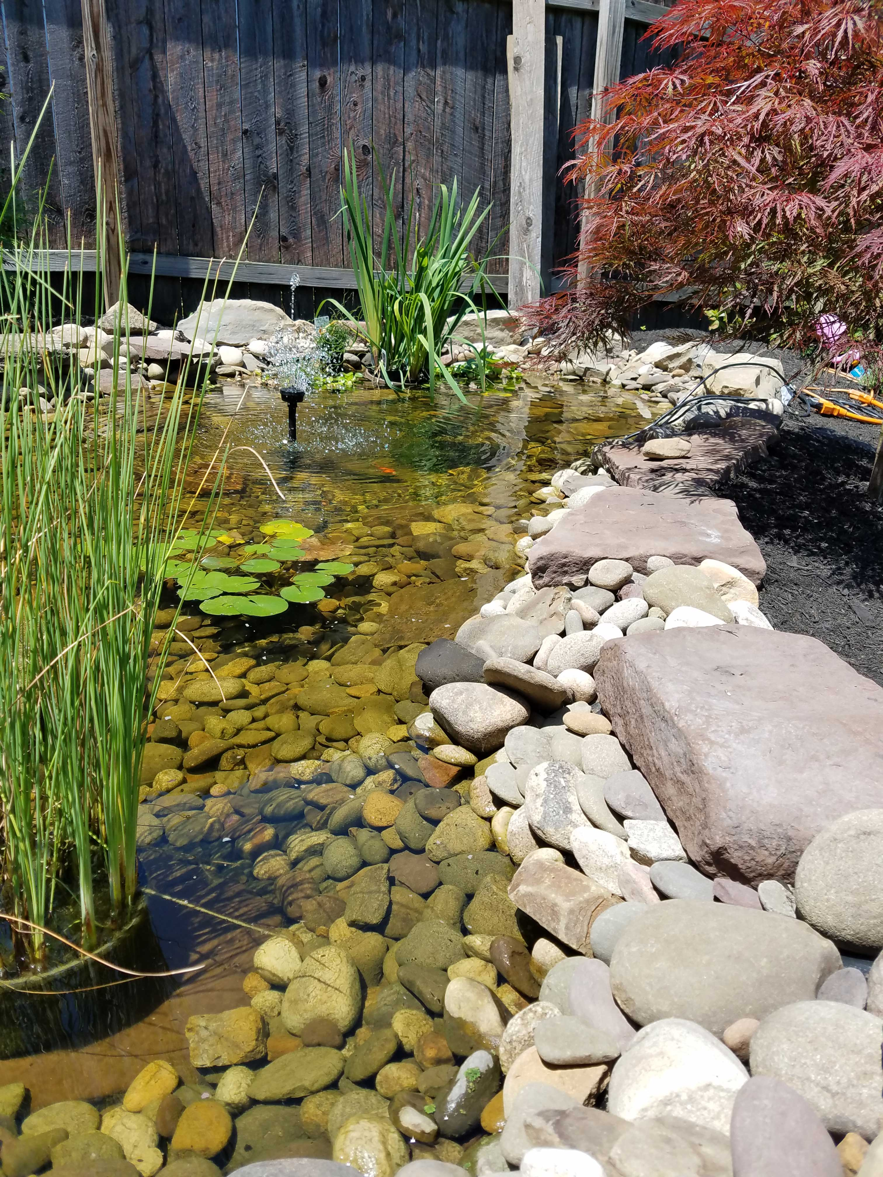 pond-and-plants
