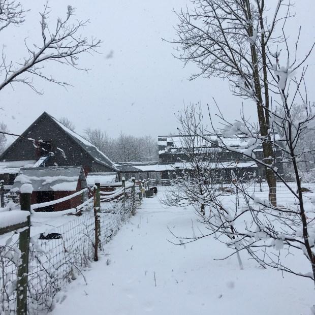 snow - 1.jpg