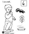 The five senses, sense of smell preschool and kindergarten