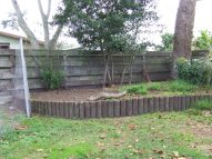 This raised bed was the cause of most of the time and energy. Big tree, stumps, re-sprouting stumps, ivy, pinecone scales...