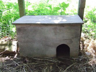 I tried this little hutch to put the chicks' food in. It was too small: the hens could reach inside and peck the food.