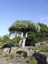 Succulents and other arid plants don't appeal to me in a big way but they are fascinating on the scale seen here.