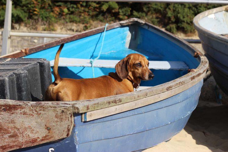 tedboat