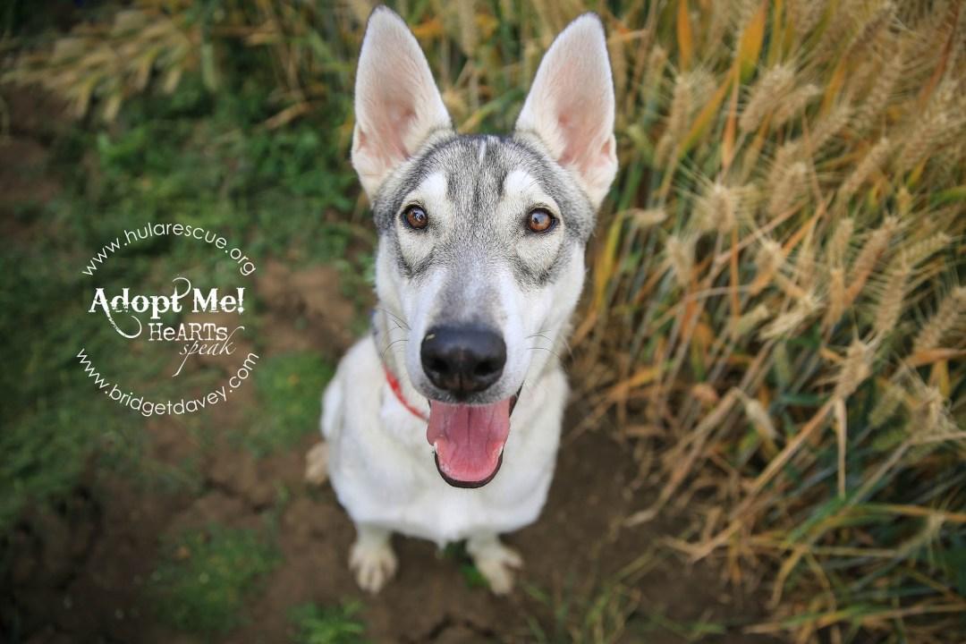 Cana - HULA - London Dog Photography Bedfordshire-69