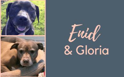 #SundayDogStories – Enid & Gloria