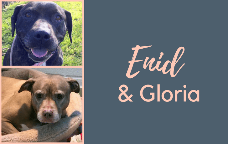 #SundayDogStories – Enid & Gloria