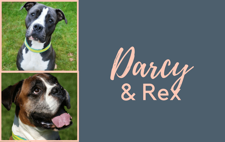 #SundayDogStories – Darcy & Rex