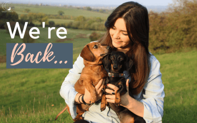Back doing what we love: Blogging About Dogs!