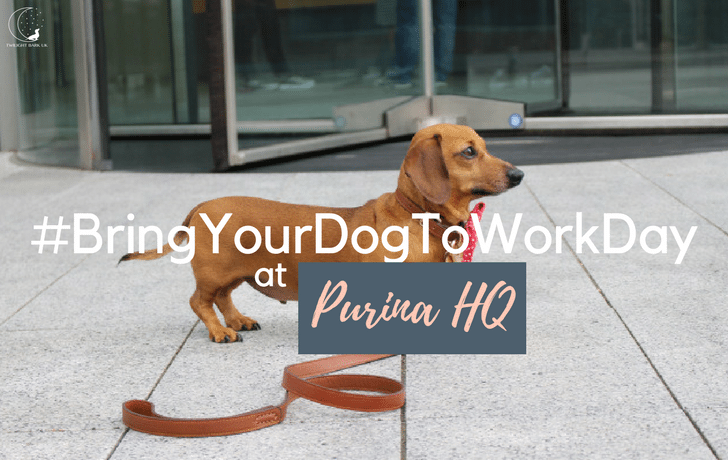 Bring Your Dog To Work Day (At Purina HQ!)