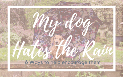 My dog hates the rain! 6 Ways to help