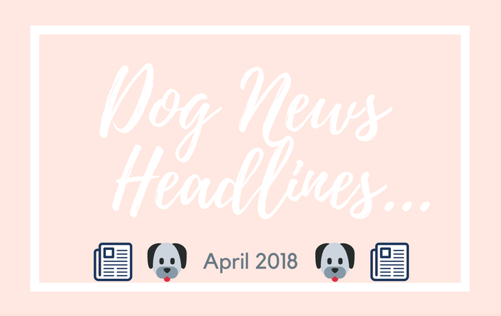 Dog News Headlines: April 2018