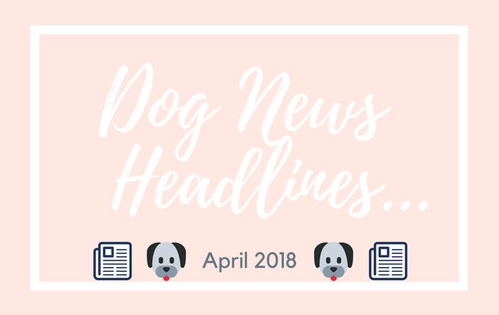 Dog News Headlines: April 2018