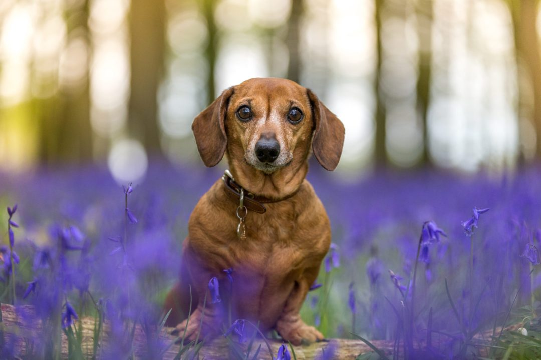 Some tips for dog owners about why dogs and nature make a pawfect combination. Click to discover more.