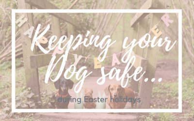 4 ways to protect your dogs at Easter