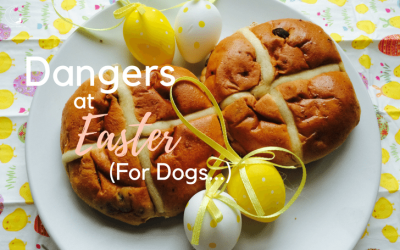 4 Ways to Protect your Dog this Easter