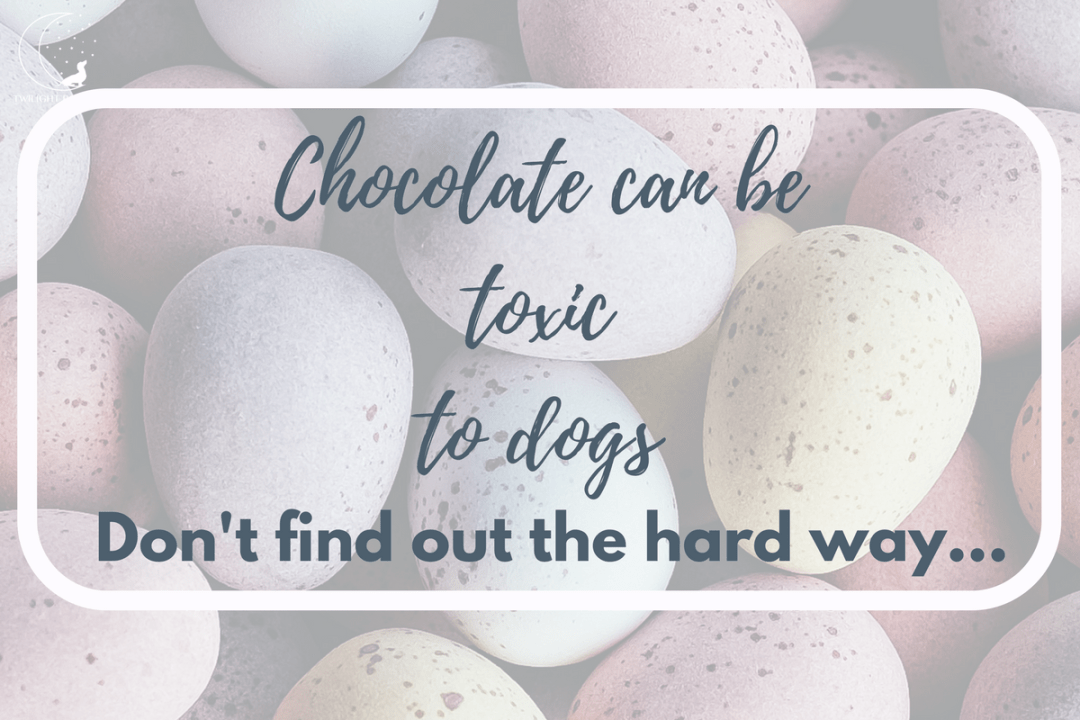Click to discover why normal chocolate & Easter eggs can be toxic to dogs
