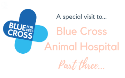 A very special animal hospital – Blue Cross (Part Three)