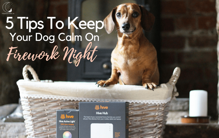 Creating a 'Pet Zen Den' this Bonfire Night