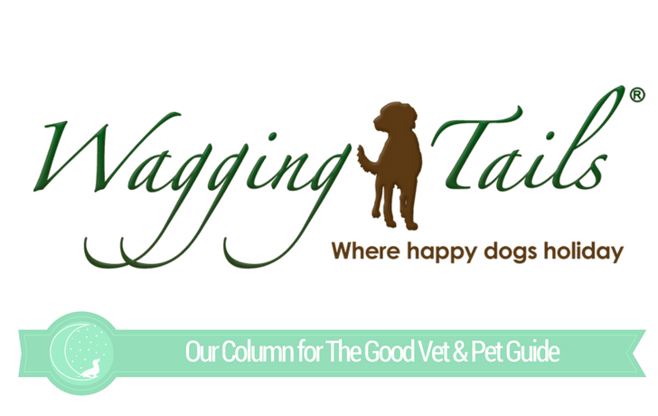 The Good Vet & Pet Guide (Interview with Wagging Tails)