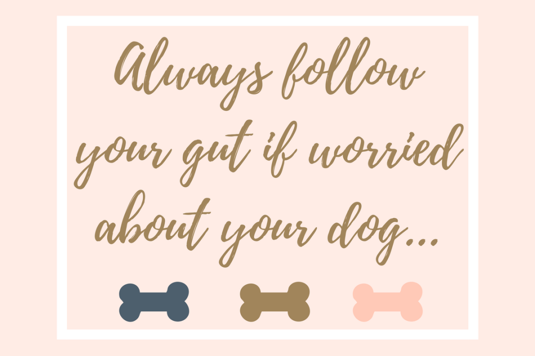 Click to discover why it's always good to follow your gut when it comes to your dogs health.