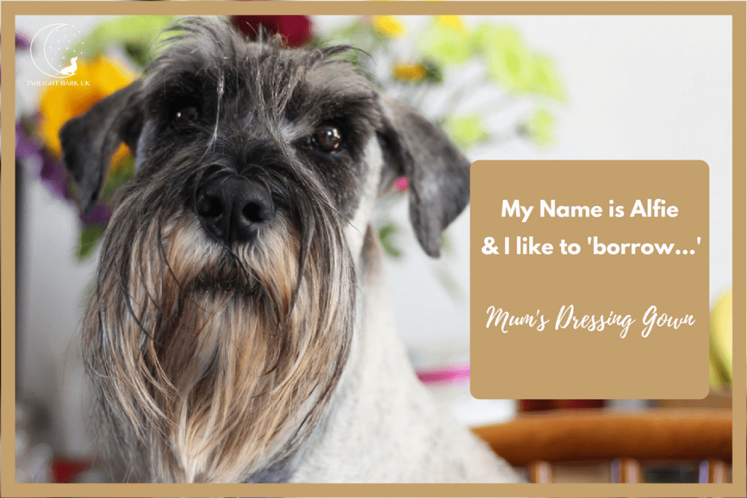 It's true! My dog is a sock thief! Click to read 4 funny dog tales from dog parents about their dog. This is Alfie's story