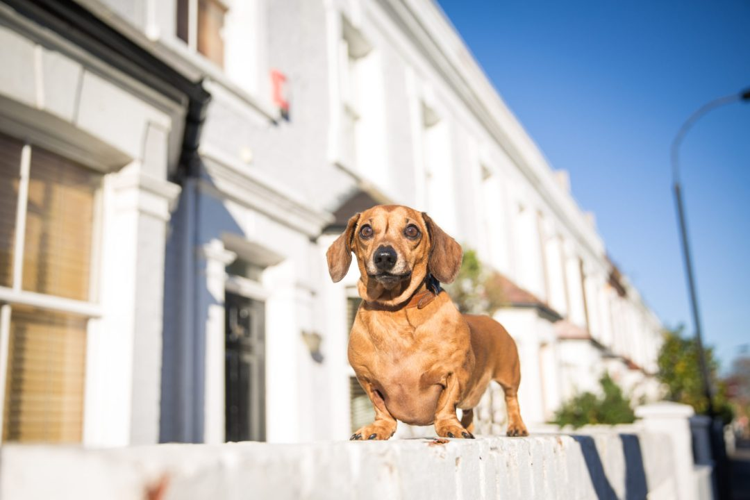 ted-london-dog-photography-16