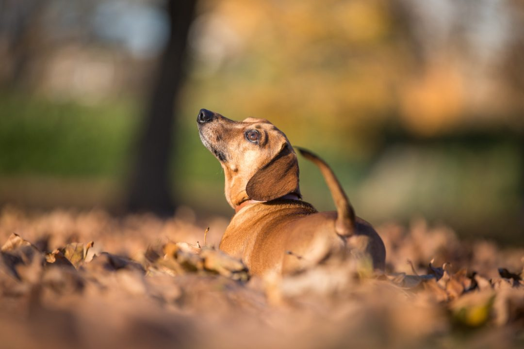 ted-london-dog-photography-21