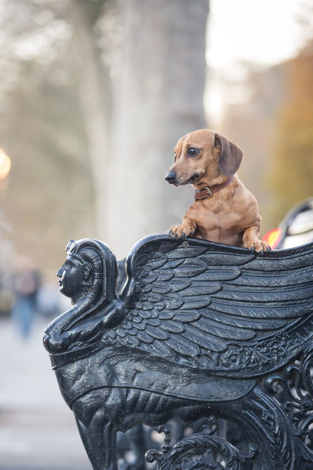ted-london-dog-photography-5