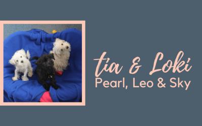 #SundayDogStories – Tia, Loki, Pearl, Leo & Sky
