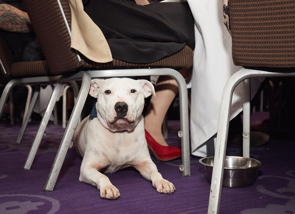 The Mayhew Tinsel & Tails Ball
