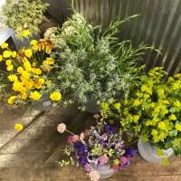 Brill's Penrose Flower Field