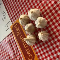 Todd Family Garlic