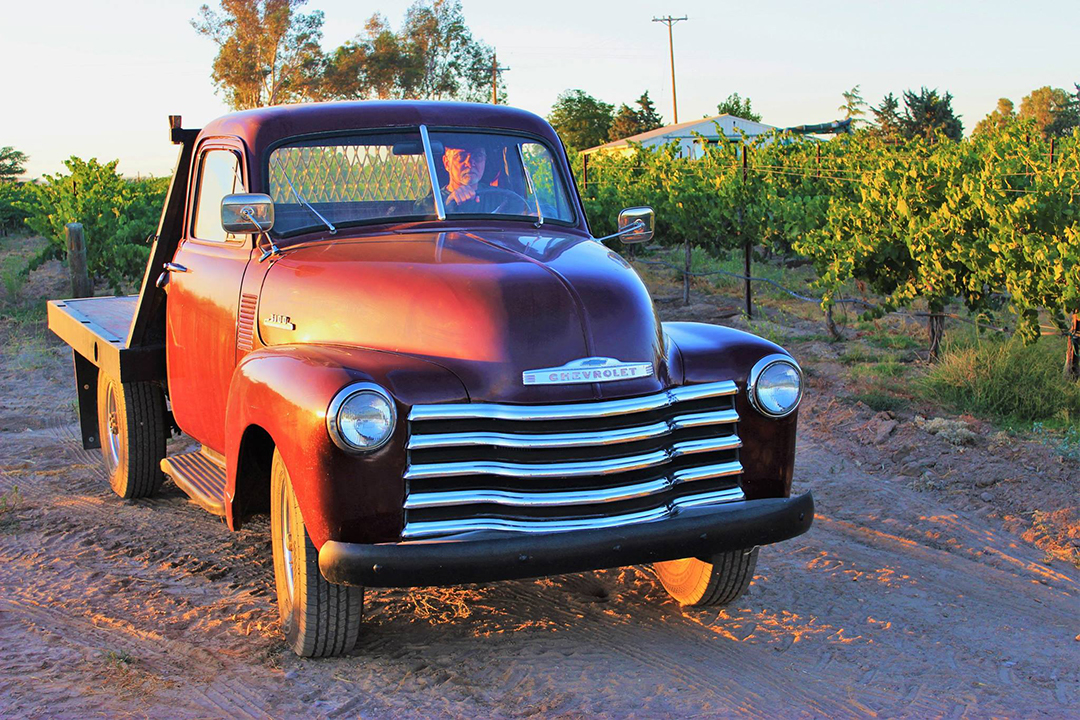 53 Chevy Truck Steve vineyard